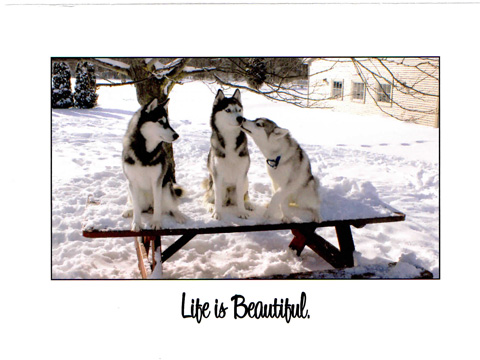 Life is Beautiful.inside
